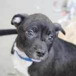 Adoptable (Official) Georgia Dogs for July 30, 2019