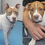 Adoptable (Official) Georgia Dogs for July 3, 2019