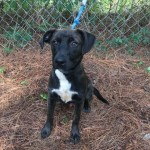 Adoptable (Official) Georgia Dogs for July 2, 2019