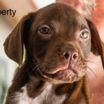 Adoptable (Official) Georgia Dogs for July 8, 2019