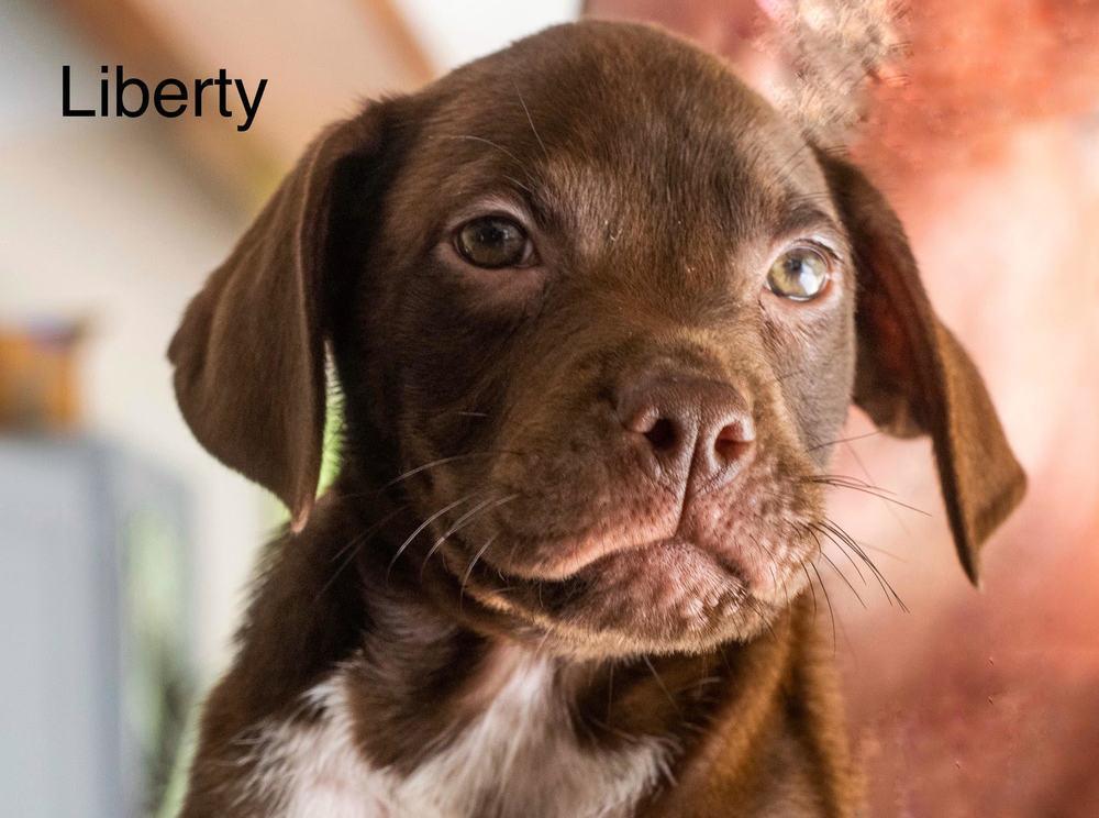Liberty Ruff Dog