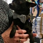 Adoptable (Official) Georgia Dogs for July 1, 2019