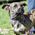 Adoptable (Official) Georgia Dogs for July 16, 2019