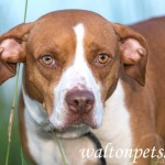 Adoptable (Official) Georgia Dogs for August 22, 2019