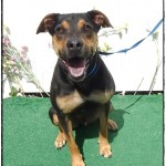 Adoptable (Official) Georgia Dogs for August 29, 2019