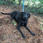 Adoptable (Official) Georgia Dogs for August 19, 2019