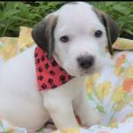 Adoptable (Official) Georgia Dogs for September 11, 2019
