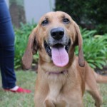Adoptable (Official) Georgia Dogs for September 9, 2019