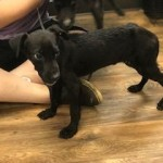 Adoptable (Official) Georgia Dogs for September 10, 2019
