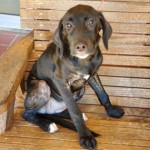 Adoptable (Official) Georgia Dogs for September 17, 2019