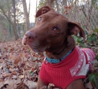 Ryder Doggie Harmony