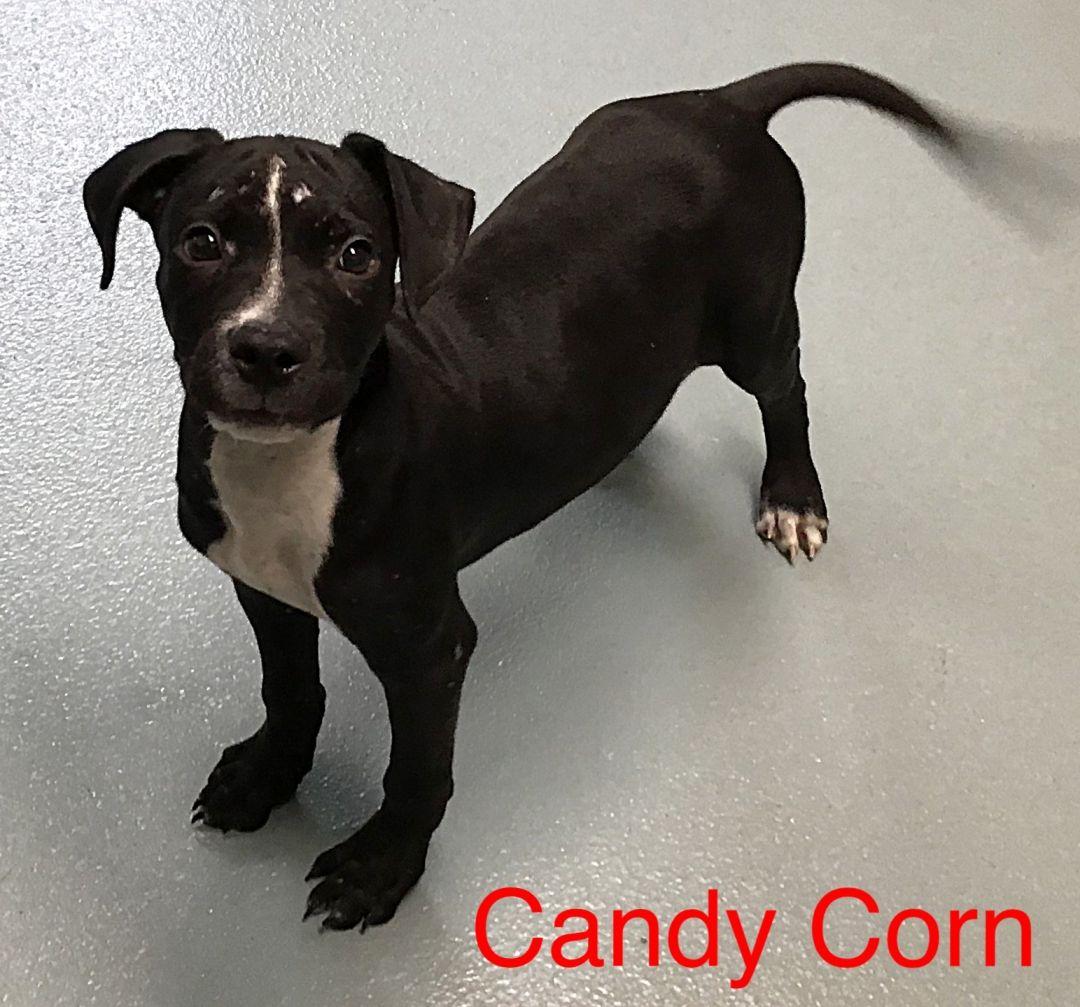 Candy Corn Lumpkin