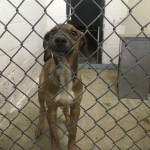 Adoptable (Official) Georgia Dogs for October 21, 2019
