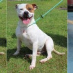Adoptable (Official) Georgia Dogs for October 22, 2019