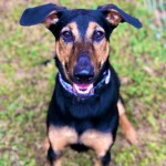Adoptable (Official) Georgia Dogs for October 28, 2019