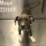 Adoptable (Official) Georgia Dogs for October 2, 2019