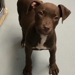 Adoptable (Official) Georgia Dogs for October 25, 2019