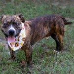 Adoptable (Official) Georgia Dogs for October 16, 2019