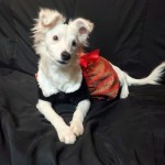 Adoptable (Official) Georgia Dogs for November 25, 2019
