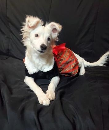 Fox Coastal Pet Rescue GA