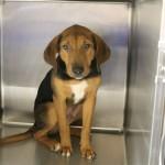 Adoptable (Official) Georgia Dogs for November 22, 2019