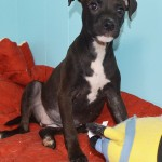 Adoptable (Official) Georgia Dogs for November 18, 2019