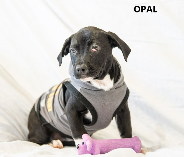 Opal Washington Wilkes Humane