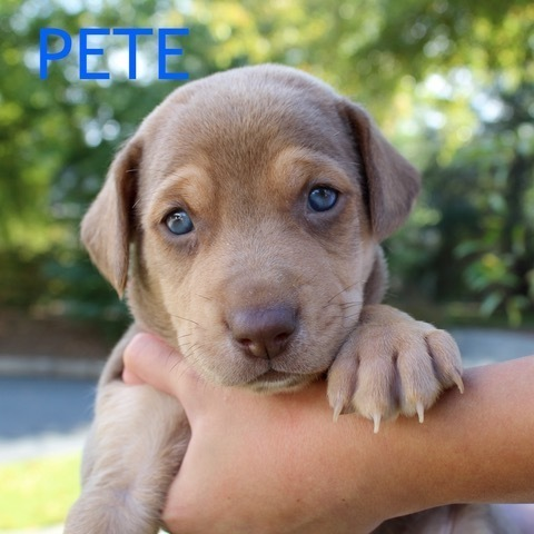 Pete Atlanta Lab Rescue