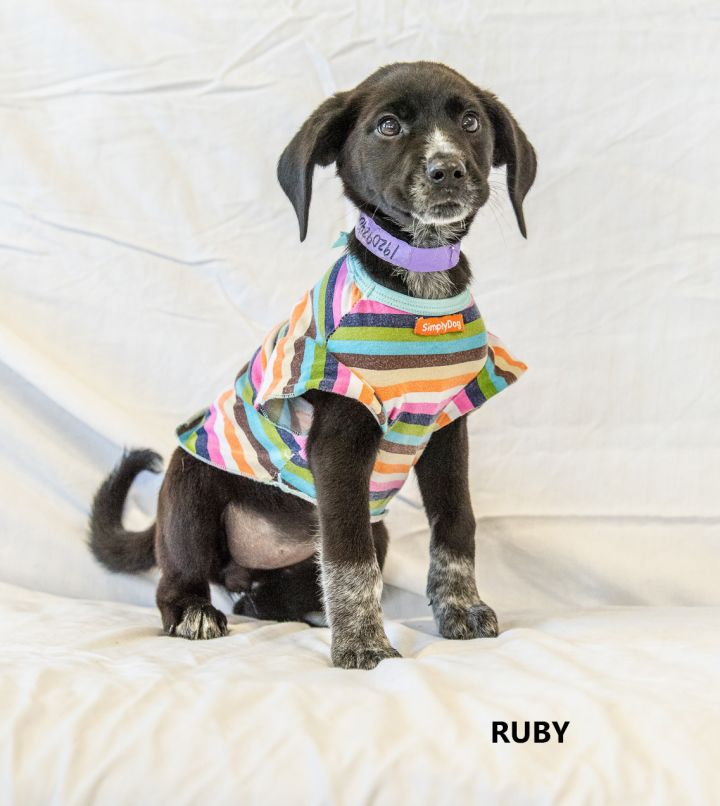 Ruby Washington Wilkes Humane