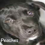 Adoptable (Official) Georgia Dogs for December 4, 2019