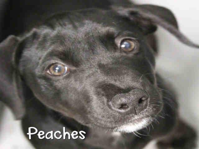 Peaches Augusta Animal Services