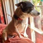 Adoptable (Official) Georgia Dogs for December 19, 2019
