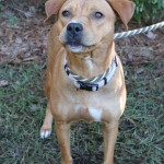 Adoptable (Official) Georgia Dogs for January 15, 2020