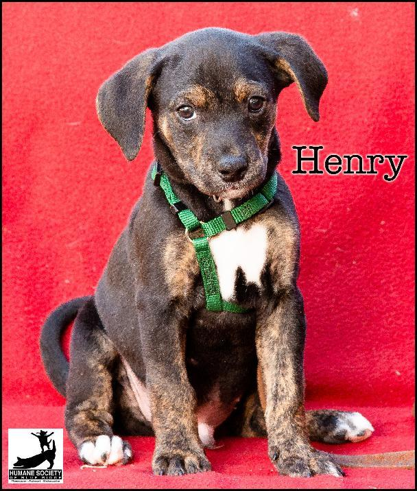 Henry Humane Society Blue Ridge