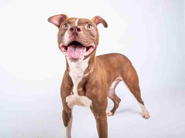 Skype Fulton Animal Services