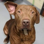 Adoptable (Official) Georgia Dogs for January 9, 2020