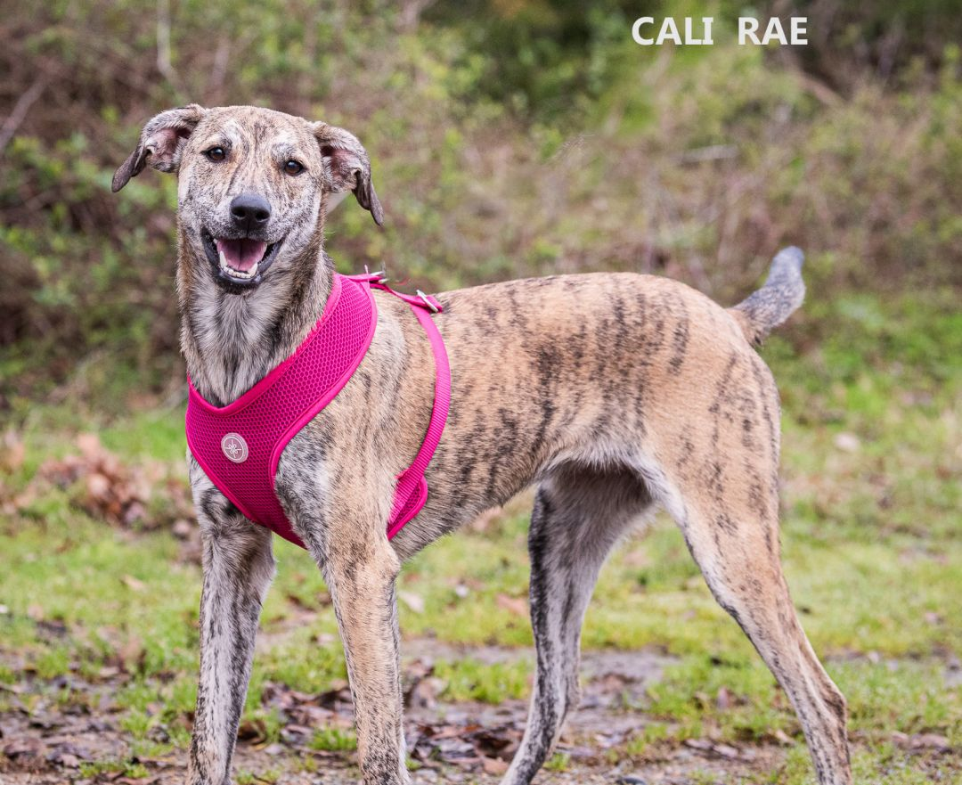 Cali Rae Washington Wilkes Humane