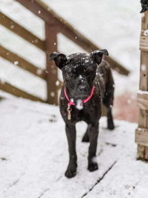Emma Athens Canine Rescue