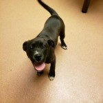 Adoptable (Official) Georgia Dogs for February 10, 2020
