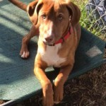 Adoptable (Official) Georgia Dogs for February 3, 2020