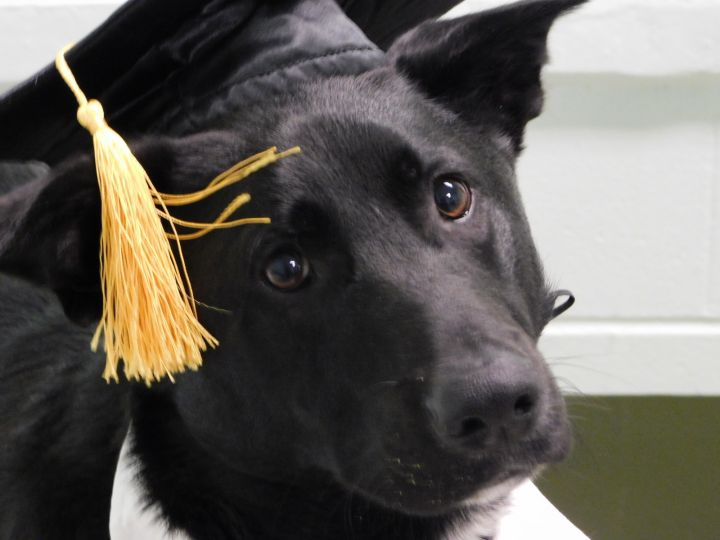 Coal Baldwin County Jail Dog