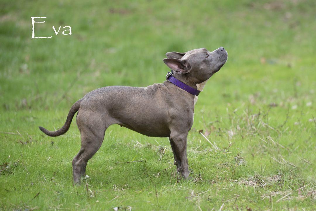 Eva Oconee County Animal Shelter