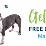 Adoptable (Official) Georgia Dogs for March 17, 2020