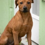 Adoptable (Official) Georgia Dogs for March 25, 2020