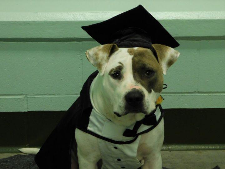 Logan Baldwin County Jail Dog