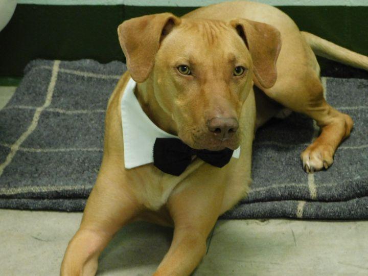 Milo Baldwin County Jail Dog