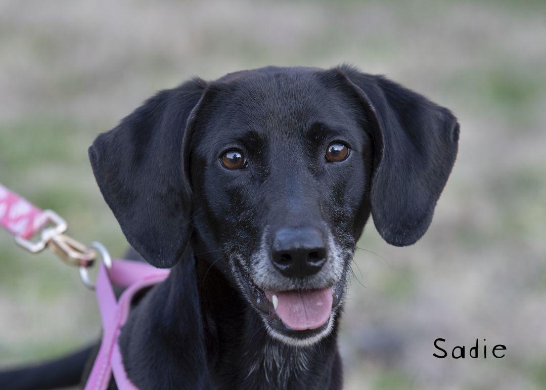 Sadie Oconee County Animal Shelter