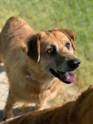 Anne Dahlonega-Lumpkin County Humane Society