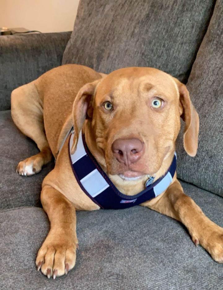 Chief Best Friends Dog Rescue Cairo GA v2