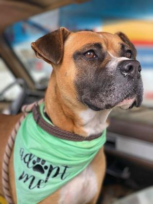 Robin Dahlonega-Lumpkin County Humane Society